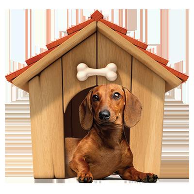 Assicurazione del cane